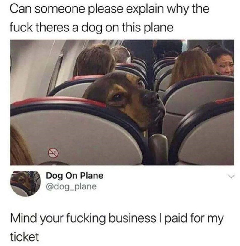 meme - Photo caption - Can someone please explain why the fuck theres a dog on this plane Dog On Plane @dog_plane Mind your fucking business I paid for my ticket
