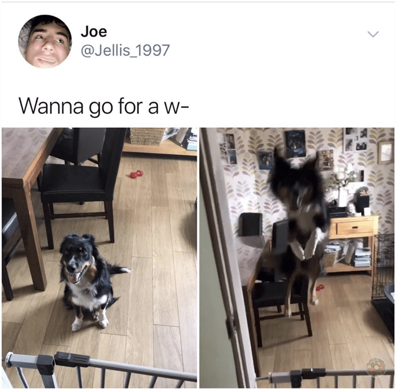 Guy asks his dog if he wants to go for a walk