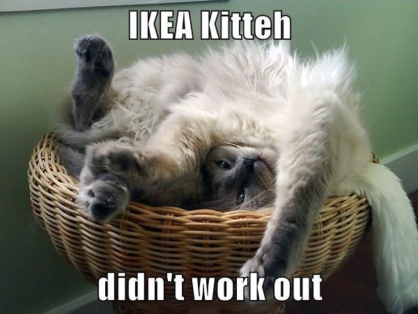 cat meme - Photo caption - IKEA Kitteh didn't work out