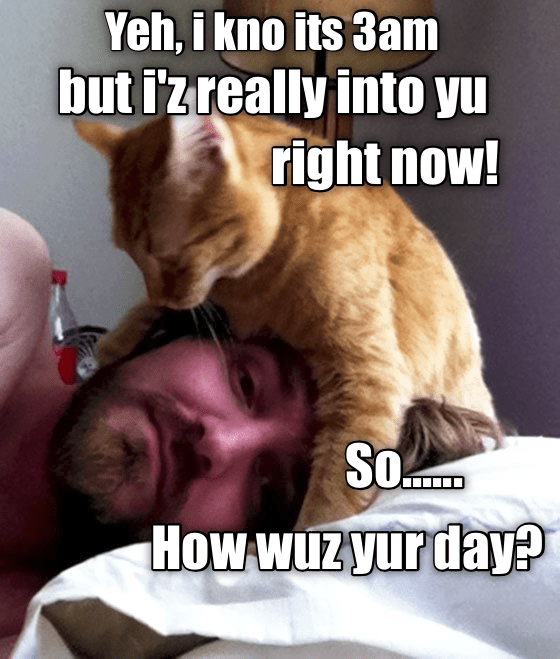meme - Cat - Yeh, i kno its 3am but izreally into yu right now! So How WUZyurday?