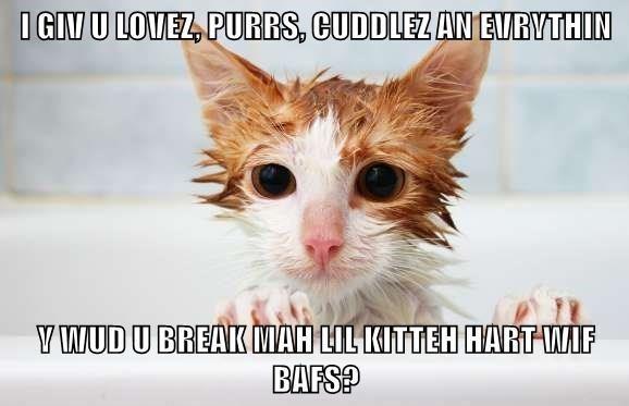 meme - Cat - IGIN U LOVEZ PURRS, CUDDLEZ AN EVRYTHIN YWUD U BREAK MAH LIL KITTEH HARTWIF BAFS?