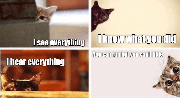 meme - Cat - Iknow what you did I see everything You can run but you cant hide I hear everything