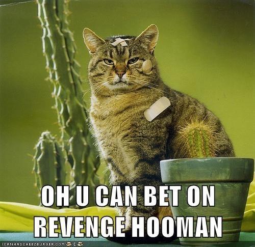 meme - Cat - OHU CAN BET ON REVENGE HOOMAN ICANHASCHEEZEURGERCOM