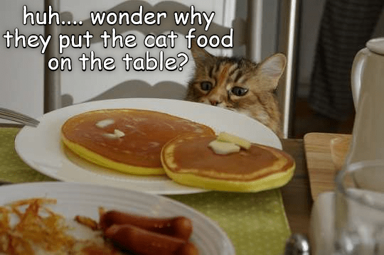 meme - Meal - huh.... wonder why they put the cat food on the table?