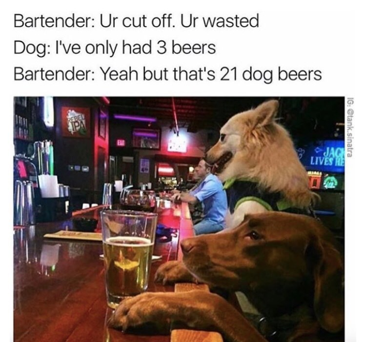 "Dogs at the bar who only had three drinks, which is 21 in ""dog drinks"""