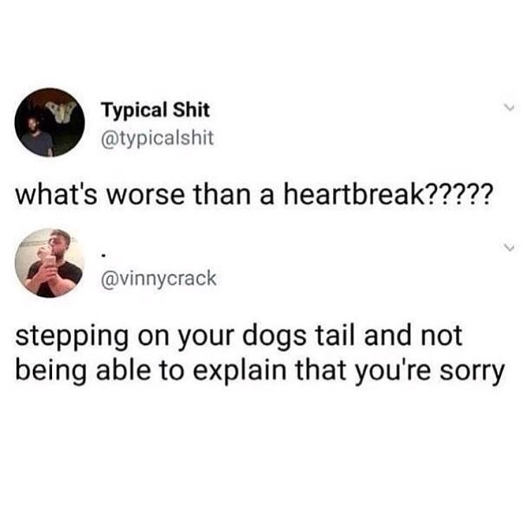 Funny tweet about how stepping on a dog's tail is worse than heartbreak.