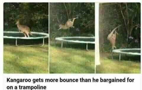 happy meme of a kangaroo bouncing on a trampoline