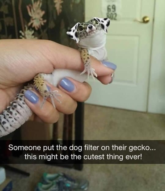 dog filter animals - Hand - 69 Someone put the dog filter on their gecko... this might be the cutest thing ever!