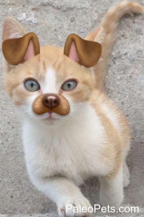 dog filter animals - Cat - PaleoPets.com