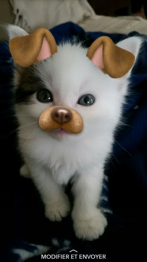 dog filter animals - Cat - MODIFIER ET ENVOYER