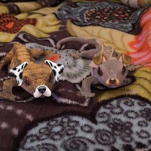 dog filter animals - Canidae