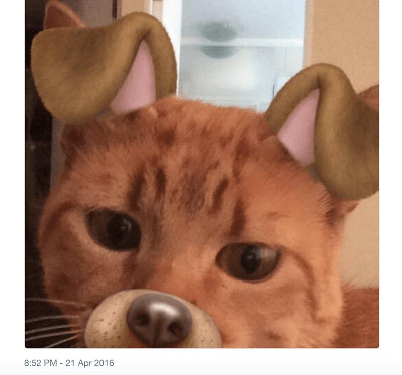 dog filter animals