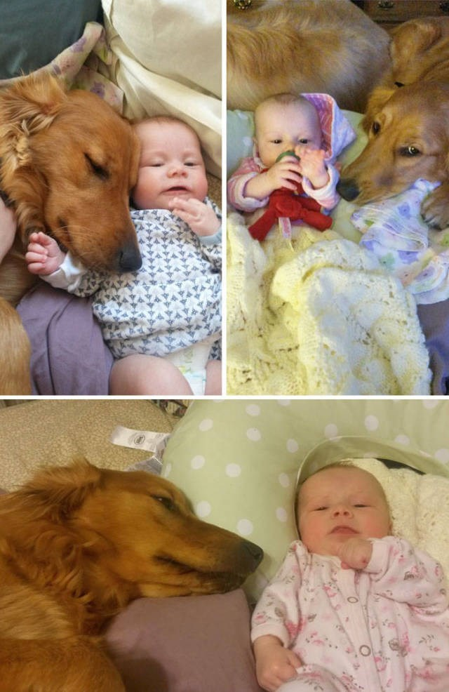 Dog breed