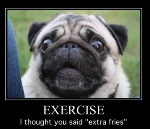 "Pug - EXERCISE I thought you said ""extra fries"""