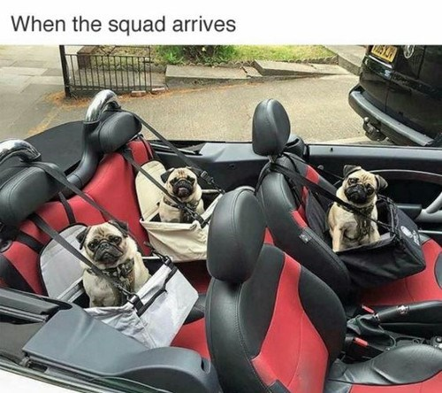 Vehicle - When the squad arrives