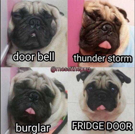 Dog - door bell thunder storm messithepug FRIDGE DOOR burglar