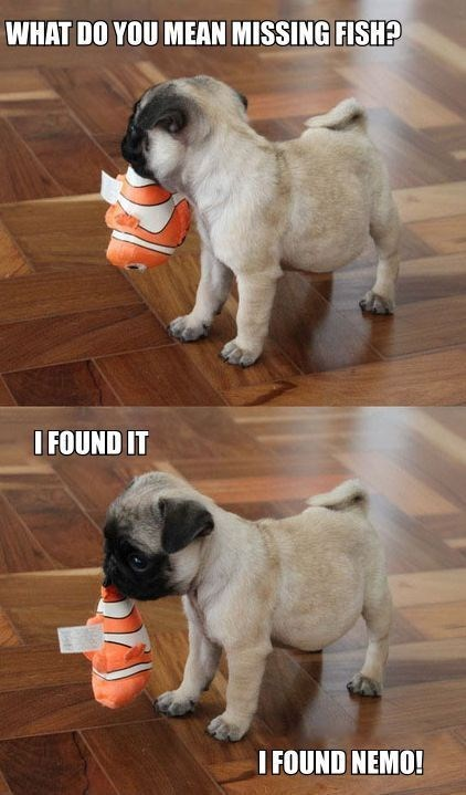 Dog - WHAT DO YOU MEAN MISSING FISH? IFOUND IT I FOUND NEMO!