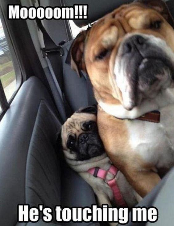 Dog - Mo000om!!! He's touching me