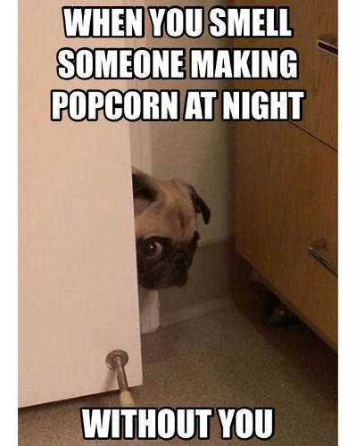 Pug - WHEN YOU SMELL SOMEONE MAKING POPCORN AT NIGHT WITHOUT YOU