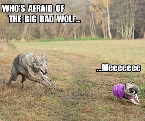Mammal - WHO'S AFRAID OF THE BIG BAD WOLF Meeeeeee
