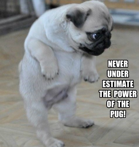 Dog - NEVER UNDER ESTIMATE THE POWER OF THE PUG!