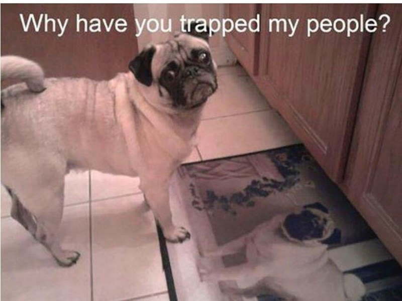 Dog - Why have you trapped my people?