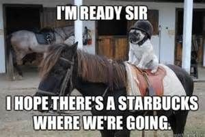 Horse - I'MREADY SIR IHOPE THERE'S A STARBUCKS WHERE WERE GOING