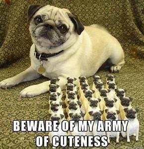 Dog - BEWARE OF MY ARMY OF CUTENESSI