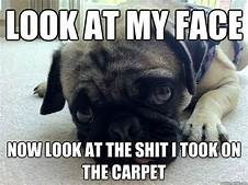 Dog - LOOK AT MY FACE NOW LOOK AT THE SHIT I TOOKON THE CARPET
