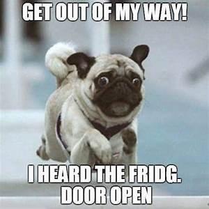 Dog - GET OUT OF MY WAY! IHEARD THE FRIDG. DOOR OPEN