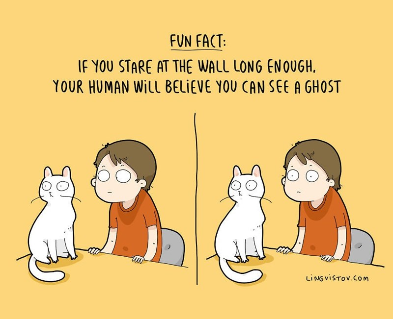 Cartoon - FUN FACT: IF YOU STARE AT THE WALL LONG ENOQUGH YOUR HUMAN WILL BELIEVE YOU CAN SEE A GHOST LING VISTOV.COm
