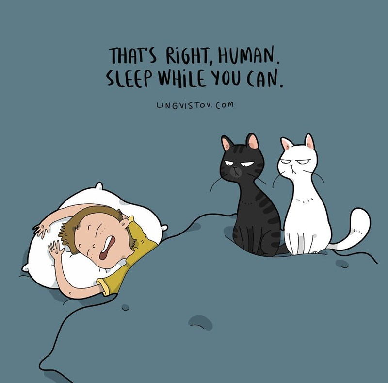 Cartoon - THAT'S RIGHT, HUMAN SLEEP WHILE YOU CAN LING VISTOV. COm