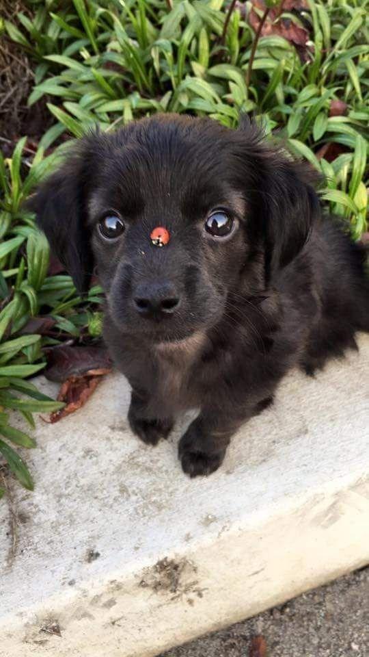 cute animals - Dog