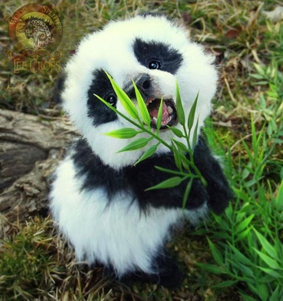 cute animals - Fur - WOOD EE CROSS SPLITHER