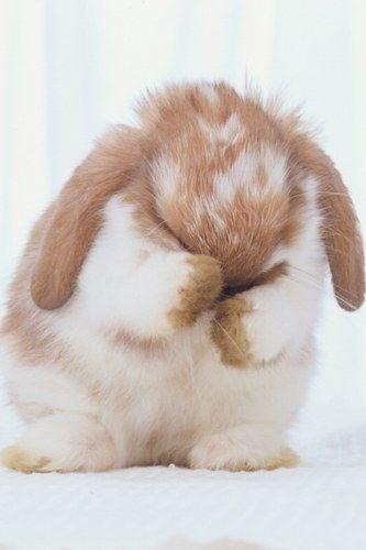 cute animals - Domestic rabbit
