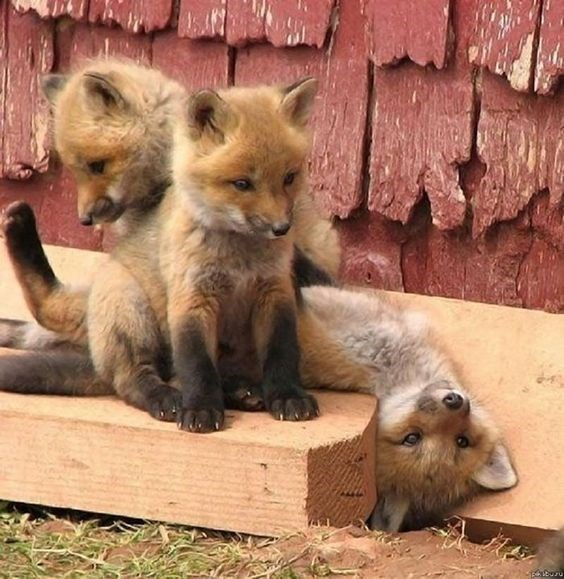 cute animals - Vertebrate - buru