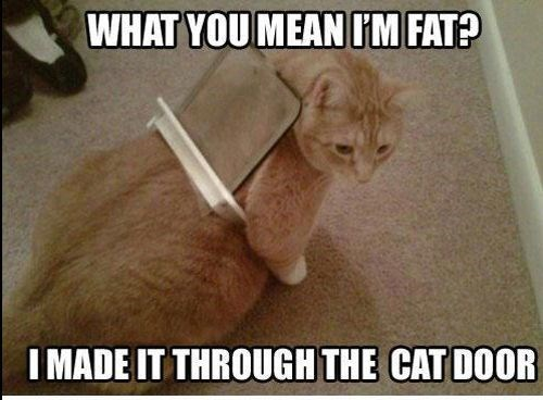 Cat - WHAT YOU MEAN IM FAT? I MADE IT THROUGH THE CAT DOOR