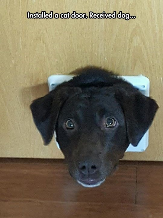 Dog breed - Installed a cat door, Received dog...