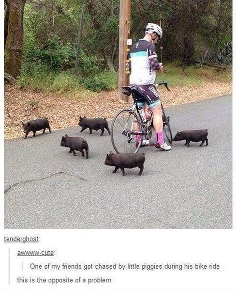 cyclist stopping on road with baby black pigs around him