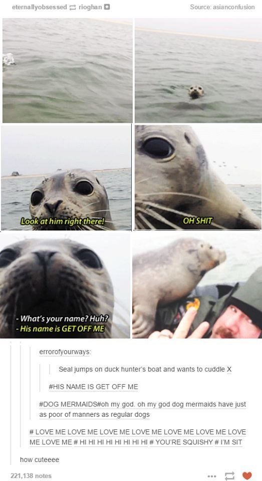 series of pictures of seal swimming closer to man then take a selfie with it