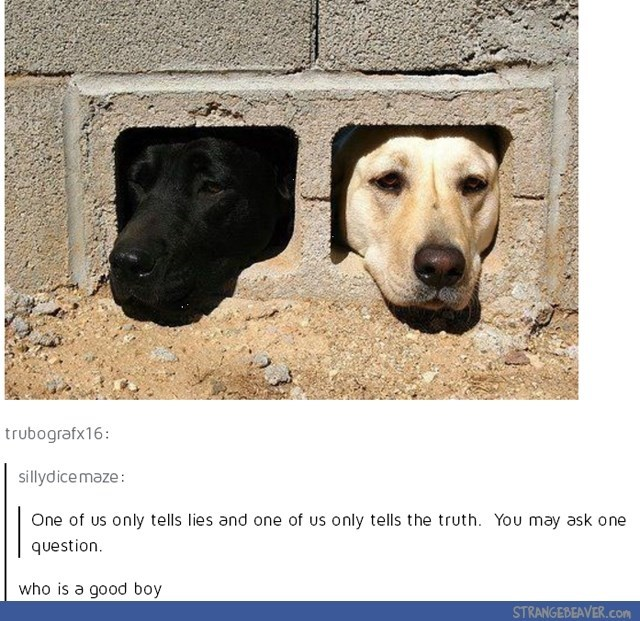 a black and a white labrador sticking their faces out of a brick you may ask one question