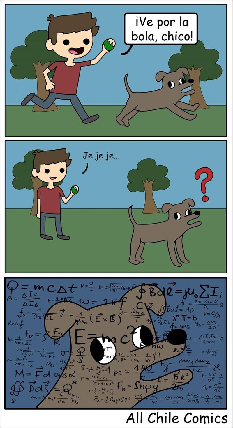 cuando le lanzas la pelota a tu perro
