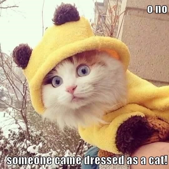 O NO someone came dressed as a cat!