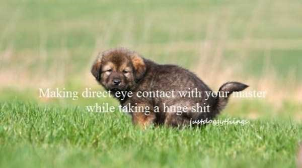 Mammal - Making direct eye contact with your master while taking a hageshit ustdogdisthings