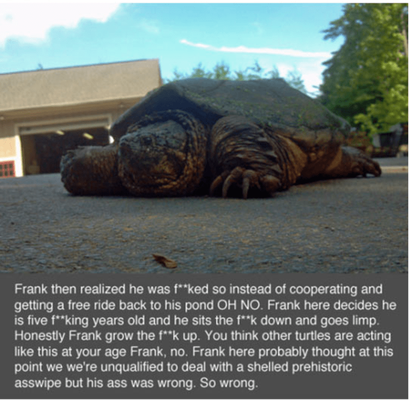 """Galápagos tortoise - Frank then realized he was f**ked so instead of cooperating and getting a free ride back to his pond OH NO. Frank here decides he is five f""""king years old and he sits the f*""""k down and goes limp. Honestly Frank grow the f*""""k up. You think other turtles are acting like this at your age Frank, no. Frank here probably thought at this point we we're unqualified to deal with a shelled prehistoric asswipe but his ass was wrong. So wrong."""