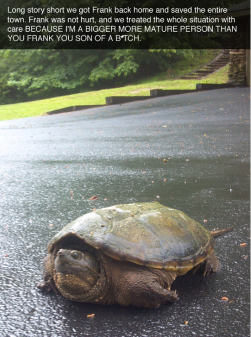 Tortoise - Long story short we got Frank back home and saved the entire town. Frank was not hurt, and we treated the whole situation with care BECAUSE I'M A BIGGER MORE MATURE PERSON THAN YOU FRANK YOU SON OF A B*TCH