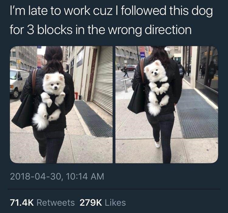 wholesome meme - Fur - I'm late to work cuz I followed this dog for 3 blocks in the wrong direction 2018-04-30, 10:14 AM 71.4K Retweets 279K Likes
