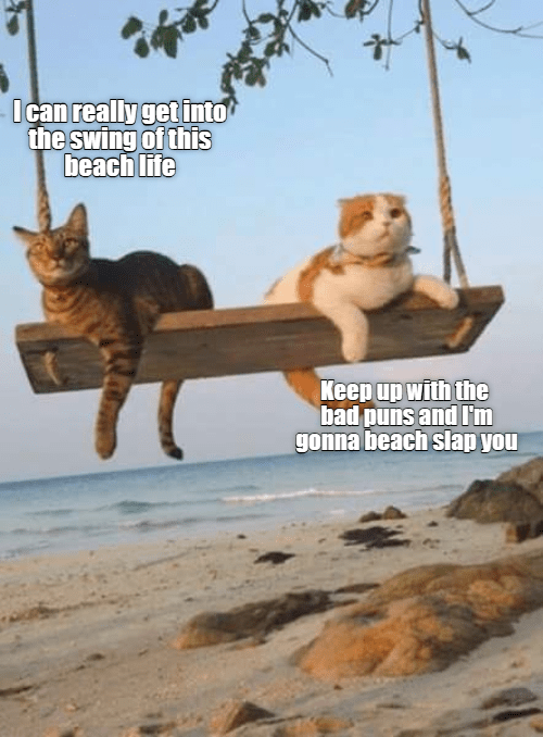Swinging Beach Vacation Lolcats Lol Cat Memes Funny Cats Funny Cat Pictures With Words On Them Funny Pictures Lol Cat Memes Lol Cats