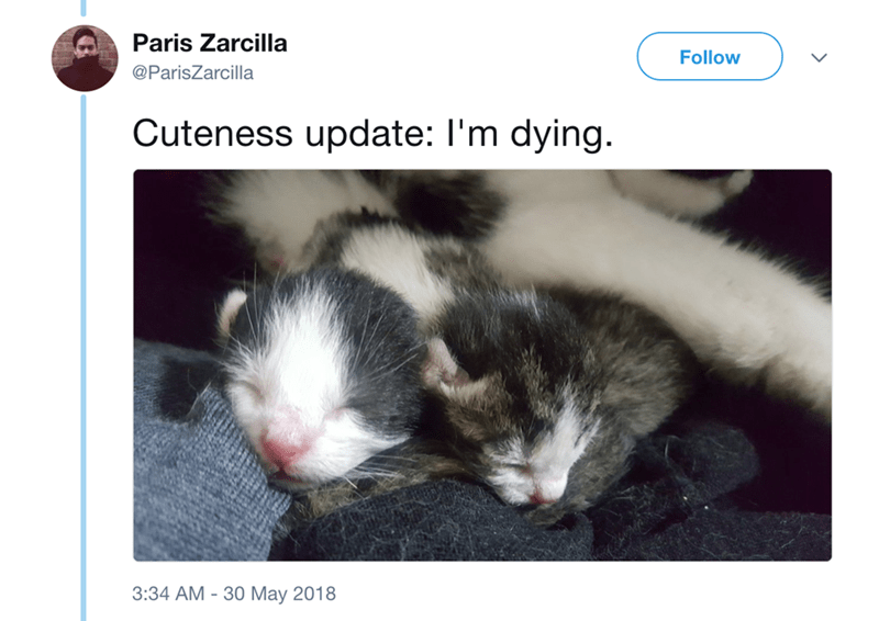 Cat - Paris Zarcilla Follow @ParisZarcilla Cuteness update: I'm dying. 3:34 AM - 30 May 2018