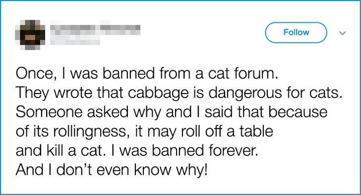 Text - Follow Once, I was banned from a cat forum. They wrote that cabbage is dangerous for cats. Someone asked why and I said that because of its rollingness, it may roll off a table and kill a cat. was banned forever. And I don't even know why!